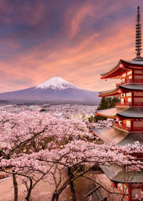 Cherry Blossoms 2022 Hosted Tour